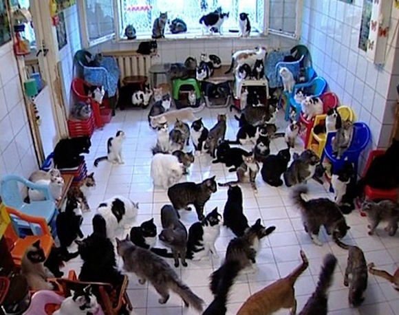 old lady with 100 cats