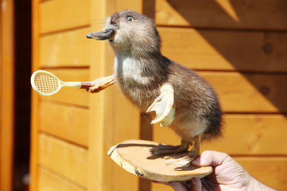 Funny furry stuffed duck with racket