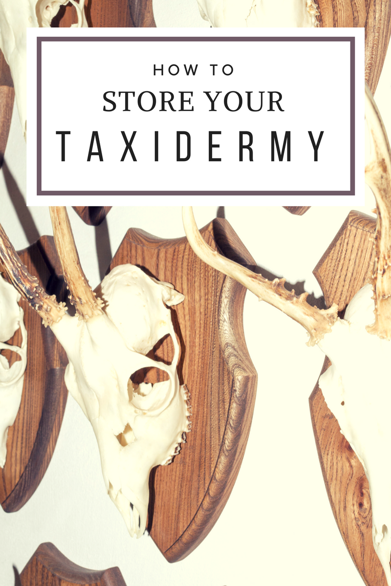 how to store your taxidermy (1)